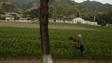 평안북도의 한 농촌 마을에서 한 여성이 밭에서 일을 하고 있다.