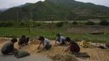 """""""중국 지원 없으면 북한 올해 식량난 극복 어려워"""""""