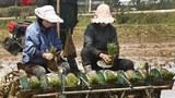 """""""북한 주부 황해도 이주는 강제노동 위한 것"""""""
