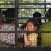 NKDB,북 자유권규약 이행 관련 질의 유엔에 제출