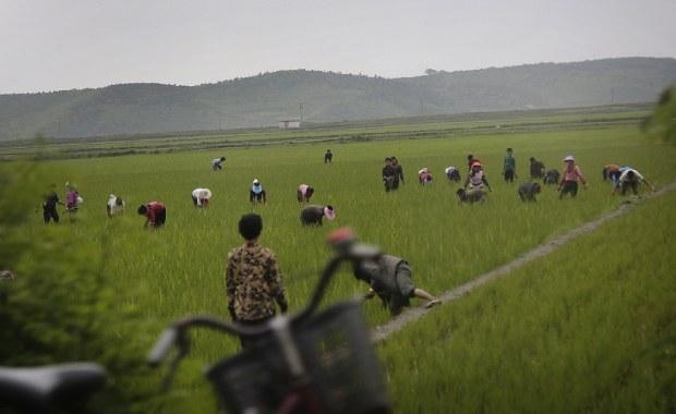 rice_farm-620.jpg