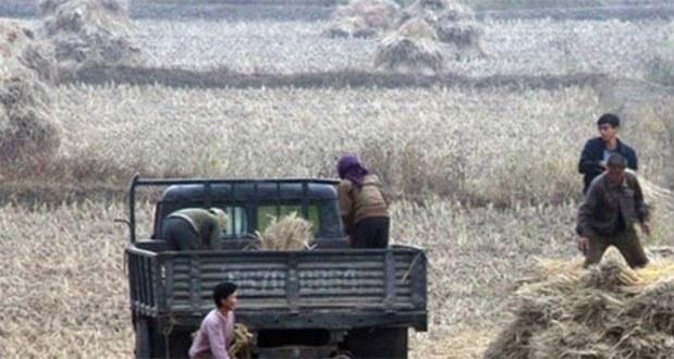 북한 곡물증산 선전했지만 역부족- 부족분 최소 100만톤
