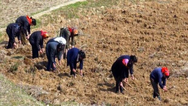북한 여성들이 묘향산 인근 밭에서 일을 하고 있다.