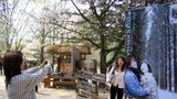 배용준 일본팬들이 겨울연가 촬영지인 강원도 춘천의 남이섬을 찾아 즐거운 시간을 보내고 있다.