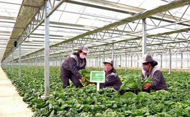"""""""북한 농업 발전 국제적 협력하에 가능하다"""""""